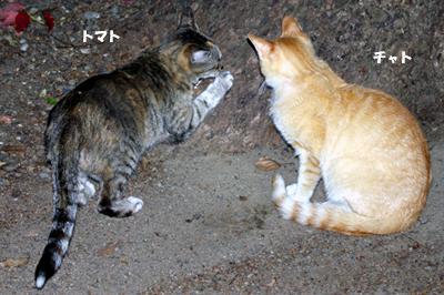 2009-05-25-3.jpg
