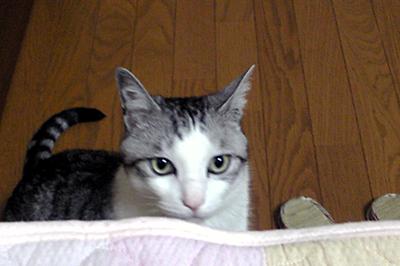 2009-06-11-2.jpg