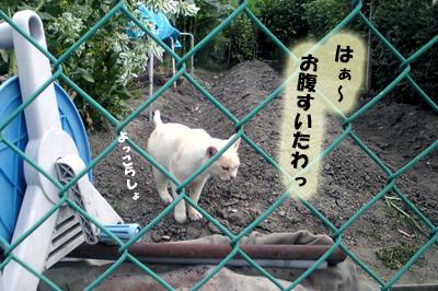 2009-09-01-2.jpg