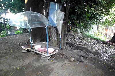 2009-09-03-6.jpg