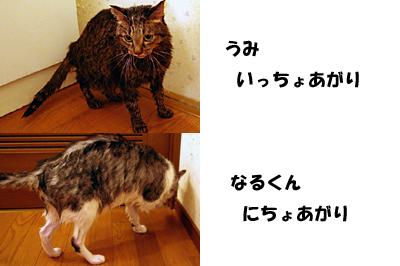 2009-11-02-1.jpg