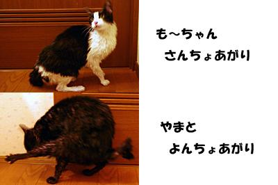 2009-11-02-2.jpg
