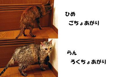 2009-11-02-3.jpg