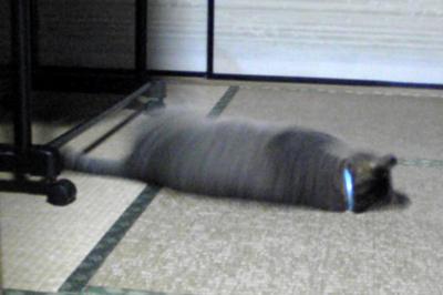 2009-11-10-2.jpg