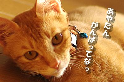2009-11-11-6.jpg