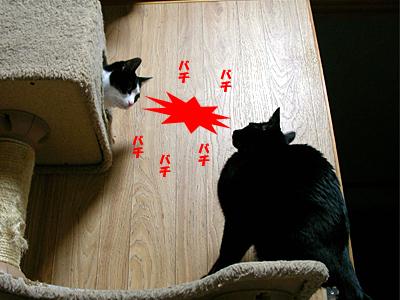 A-fight3.jpg