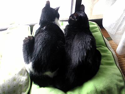 Brothers2.jpg