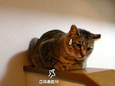 I-harden4.jpg