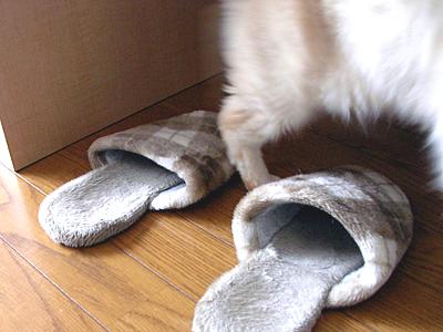 Slippers3.jpg
