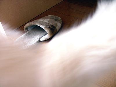 Slippers4.jpg