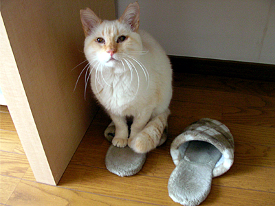 Slippers5.jpg