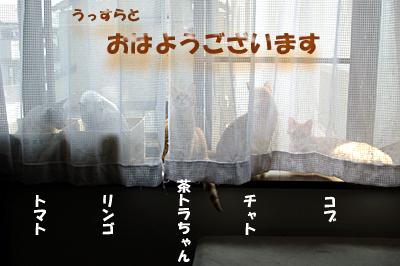 hokaku-87.jpg