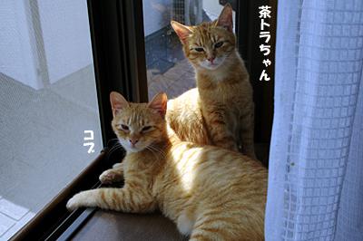 hokaku-89.jpg