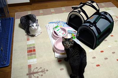 hokaku1_20090405210533.jpg