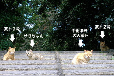 mori1_20090404133221.jpg