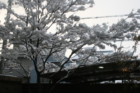3月に雪が積もった!