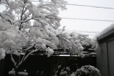 雪がたくさん積もりました