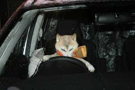 あたちが運転手よ