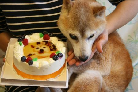 このケーキってあたちの?