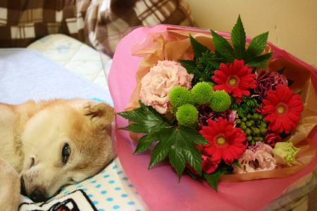 お花から元気を貰えたね