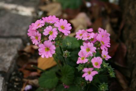 冬の花が元気になってきました