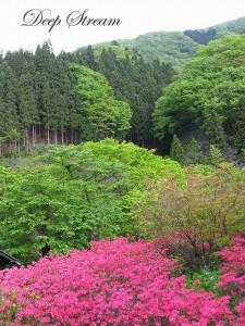 上野村の新緑