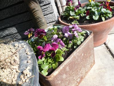 ブリキの寄せ植え