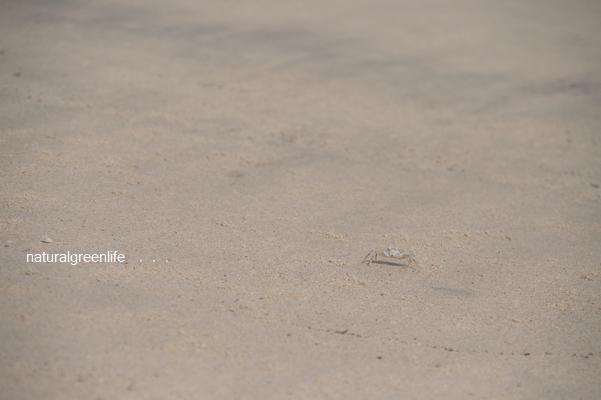 Tanjung Rhu Beach 蟹