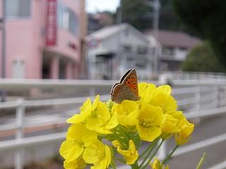 サイレントウォークで蝶を発見