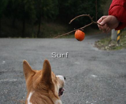 surf08113033.jpg