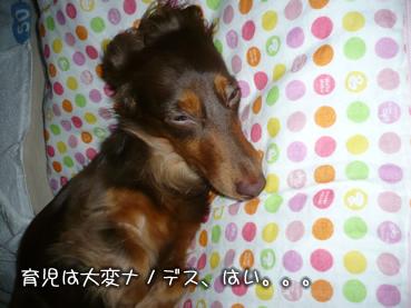 chiru_juri-08.jpg