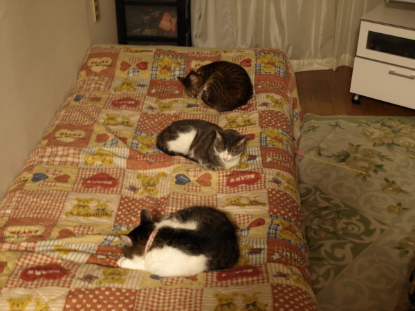 20081111_3cats