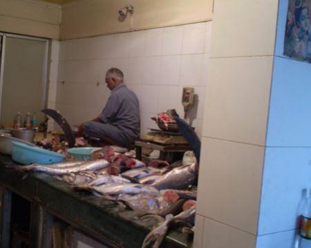 gujaratfish08.jpg