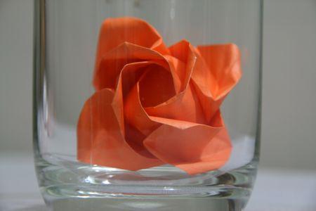 kawasaki-rose1.jpg