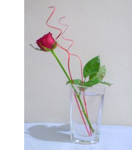 rose031108.jpg