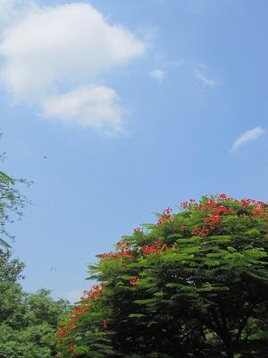 sky290811.jpg