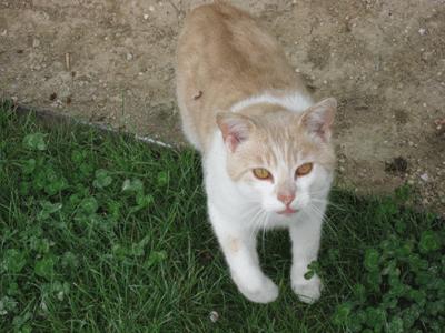 ベルサイユの庭園にいたネコ