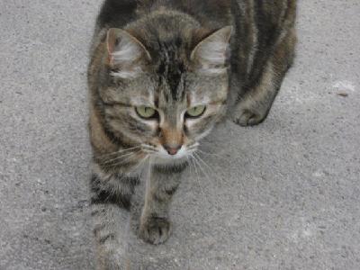 ラ・ブイユ村のネコ