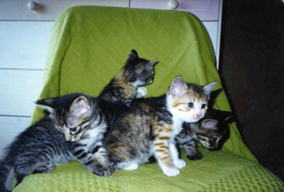 アンナと兄弟たち