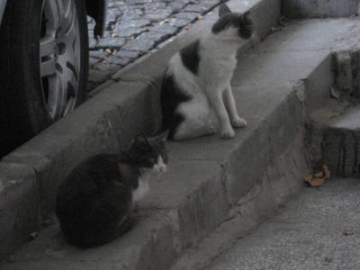 イスタンブールの野良2&3