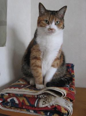 敷物の上に座るアンナ