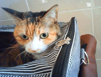 キャリーバッグから覗くアンナ