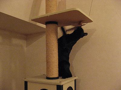 ネコタワーに登るまめたろう