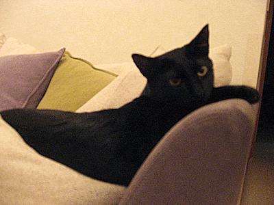 ソファでくつろぐまめたろう