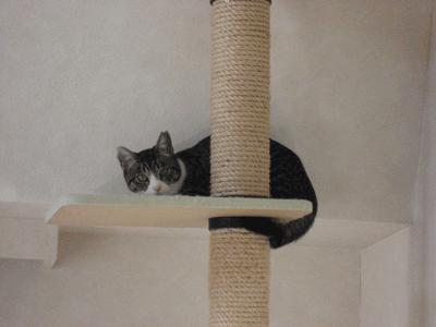 ネコタワーの上