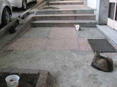 ネコの集会