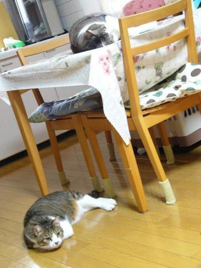銀次郎と玉三郎