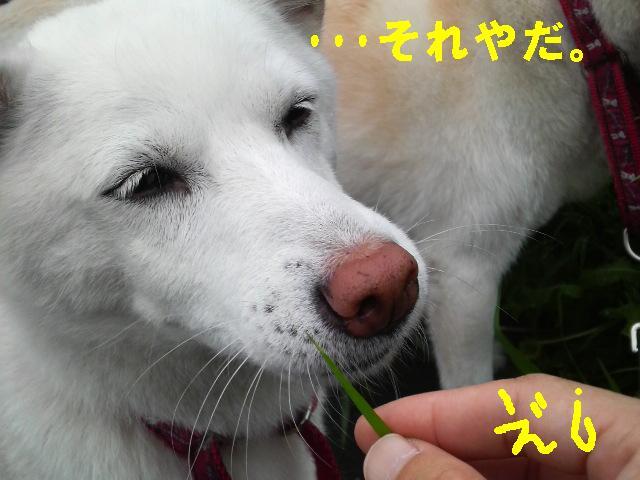 サラダな桔梗