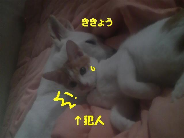 Ran&Kikyou