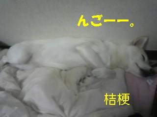 20091019桔梗
